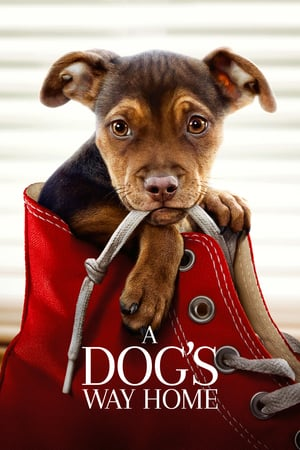Download Film A Dog's Way Home (2019) Subtitle Indonesia